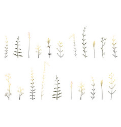 meadow wild grass and dry herbs hand drawn vector image