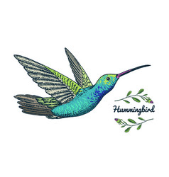 Small hummingbird rufous bird exotic tropical vector