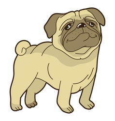 funny cartoon pug vector image vector image