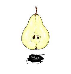 Pear slice drawing isolated hand drawn vector
