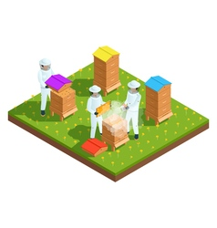 Beekeeping apiary isometric composition vector image