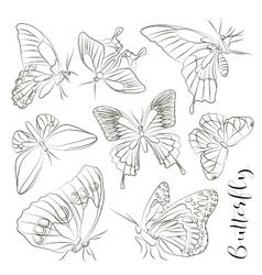 big collection butterflies vector image