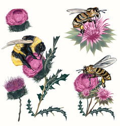 Collection high detailed bee bumblebee and bees vector