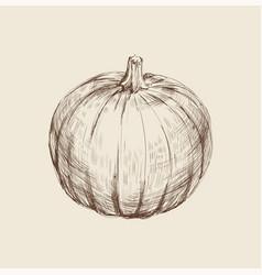 Pumpkin hand drawing vector