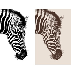 Artwork head profile zebra vector