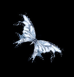 butterfly made of water splashes vector image
