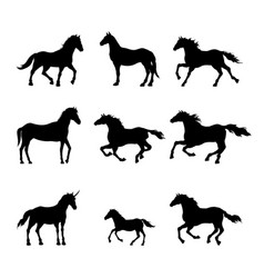 Collection black silhouettes horses vector
