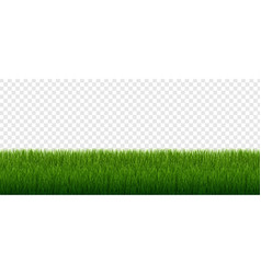 green grass border set isolated transparent vector image