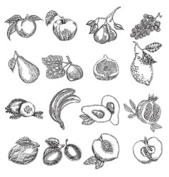 Hand drawn fruits fruit set in vector