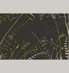 hand drawn random herbs and wild meadow wild grass vector image