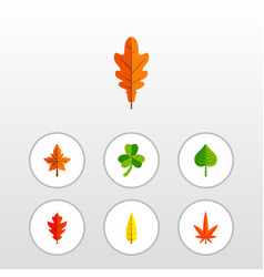 Icon flat leaf set of frond alder oaken and vector