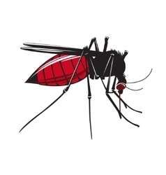 Mosquito drinks blood isolated on white background vector