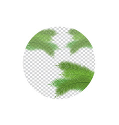 palm leaf on transparent vector image