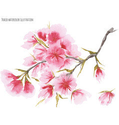 Watercolor cherry blossom vector