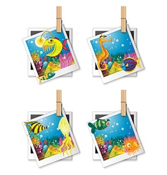 Four photo frames of fish vector image vector image