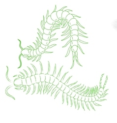 hand-drawn centipede cartoon insect icon vector image