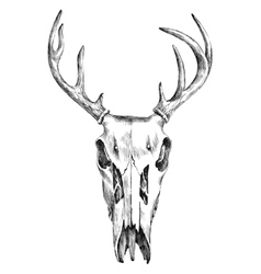 Hand drawn black and white deer scull vector