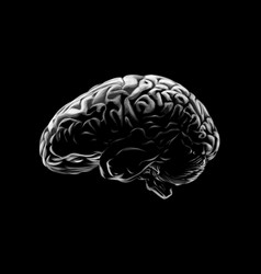 human brain on a black background hand drawn vector image