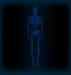 realistic human skeleton x-ray anatomy medical vector image