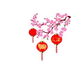 Chinese new year sakura and red lanterns vector