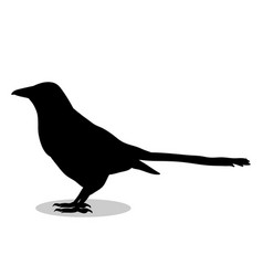 Magpie bird black silhouette anima vector
