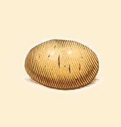 potato engraving style vector image