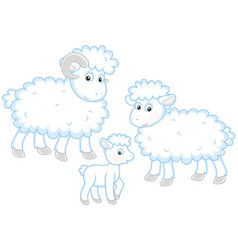 sheep lamb and ram vector image