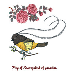 small birds paradise king saxony in new vector image