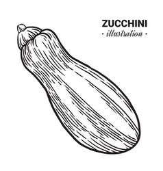 zucchini fresh food hand drawn vector image