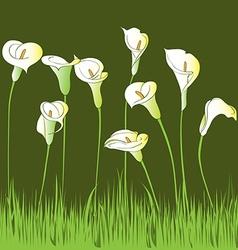 calla garden vector image