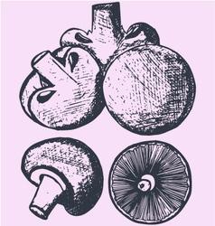 Set of mushrooms vector