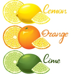 Citrus fruits vector