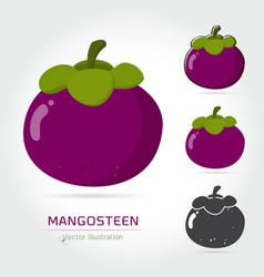 Mangosteen fruit vector