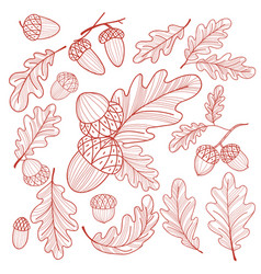 set of hand-drawn acorns and oak leaves isolated vector image