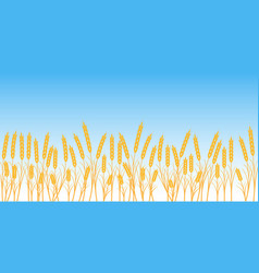 banner wheat field on blue sky background vector image