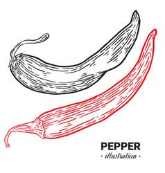 chili pepper fresh food hand drawn vector image