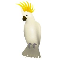 Cockatoo alba bird Parrot character vector image