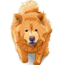 Color sketch of a dog chow-chow breed vector