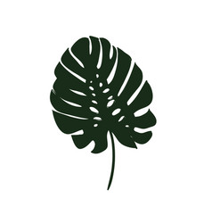 monstera leaves of a tropical plant sketch black vector image