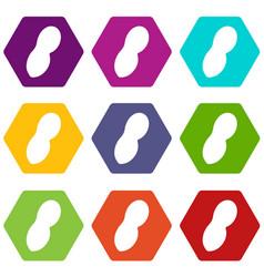 peanut icon set color hexahedron vector image