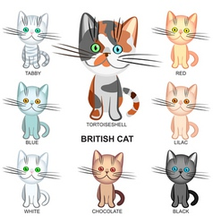 shorthair cats vector image