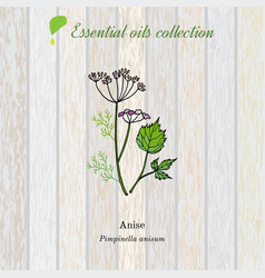 Anise essential oil label aromatic plant vector