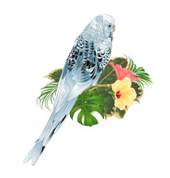 Budgerigar blue pet parakeet or shell parakeet vector