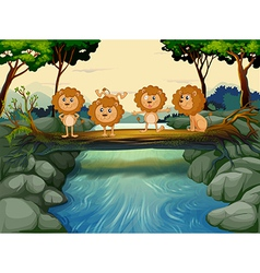 Four young lions at river vector