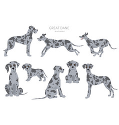 Great dane dogs in different poses adult and vector
