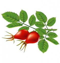 wild rose hips vector illustration vector image vector image