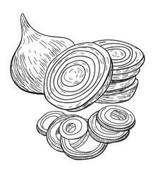 Onion hand drawn full rings and half vector