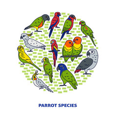 Bright parrot round concept banner in colored line vector