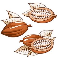 Brown cocoa bean vector