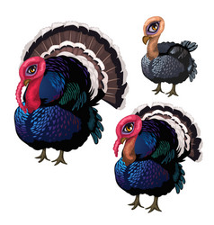 Group of three turkeys of different ages vector